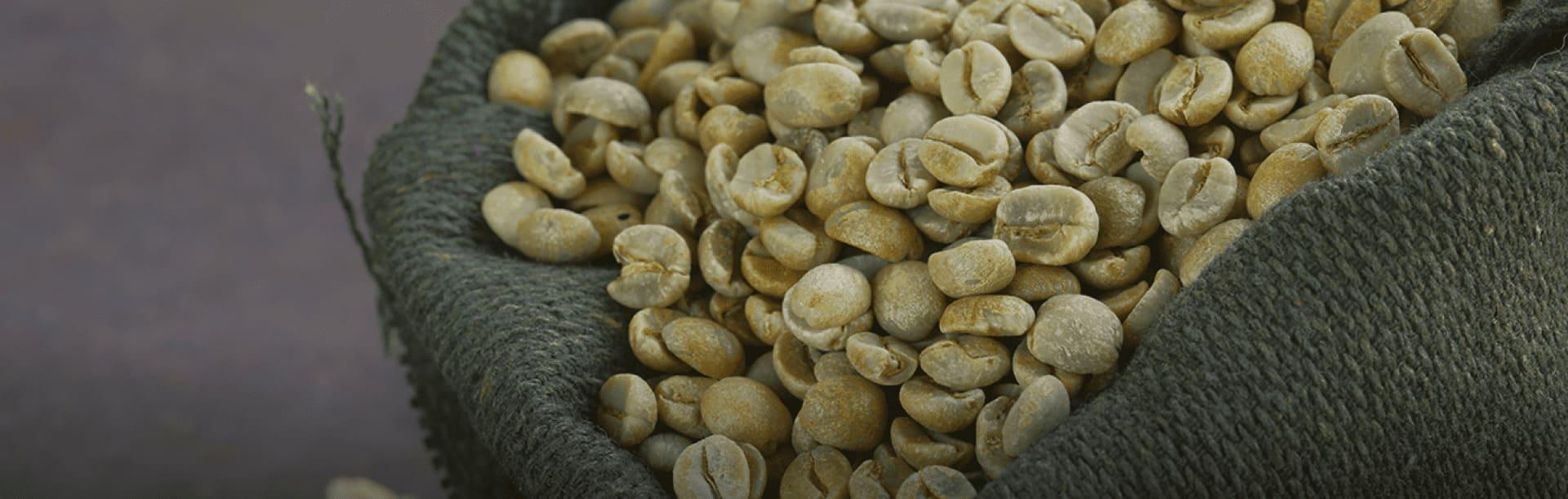 Foto ilustrativa de grãos de café