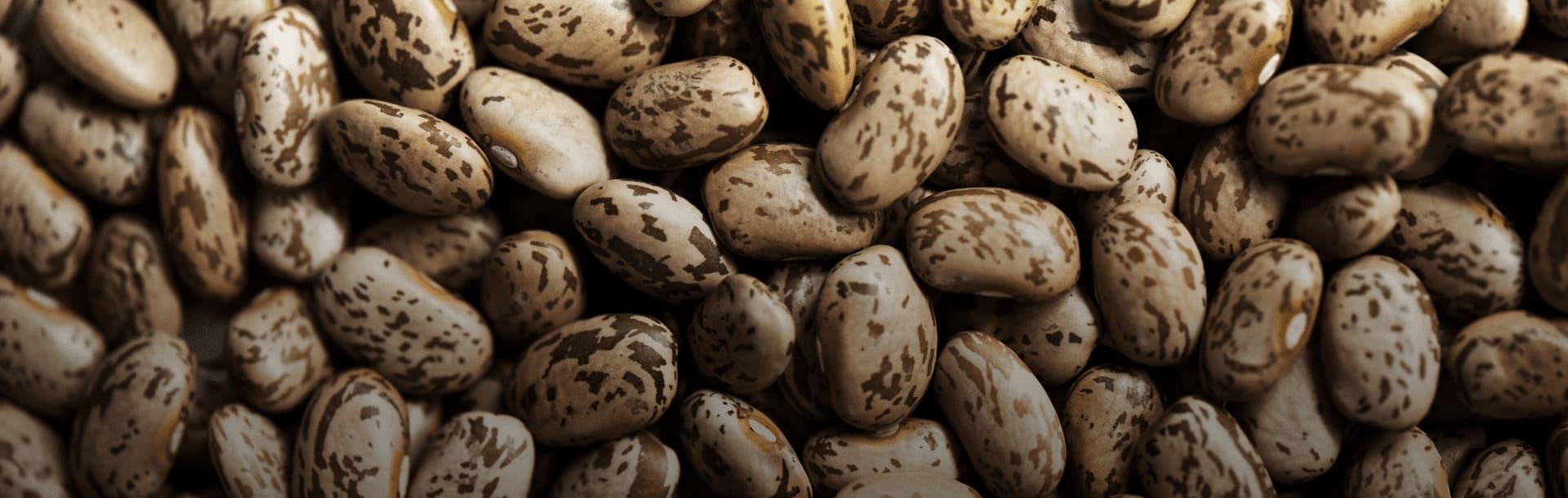 Foto ilustrativa de grãos de feijão