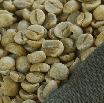 Foto ilustrativa de grãos de Café Verde